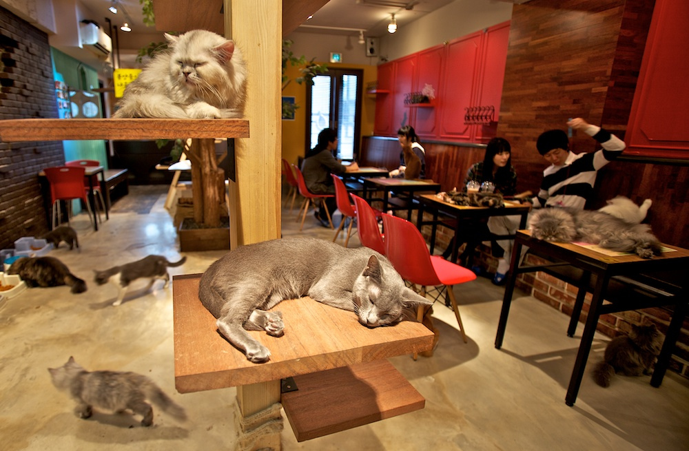 Cat-Cafe-tokyo2.jpg
