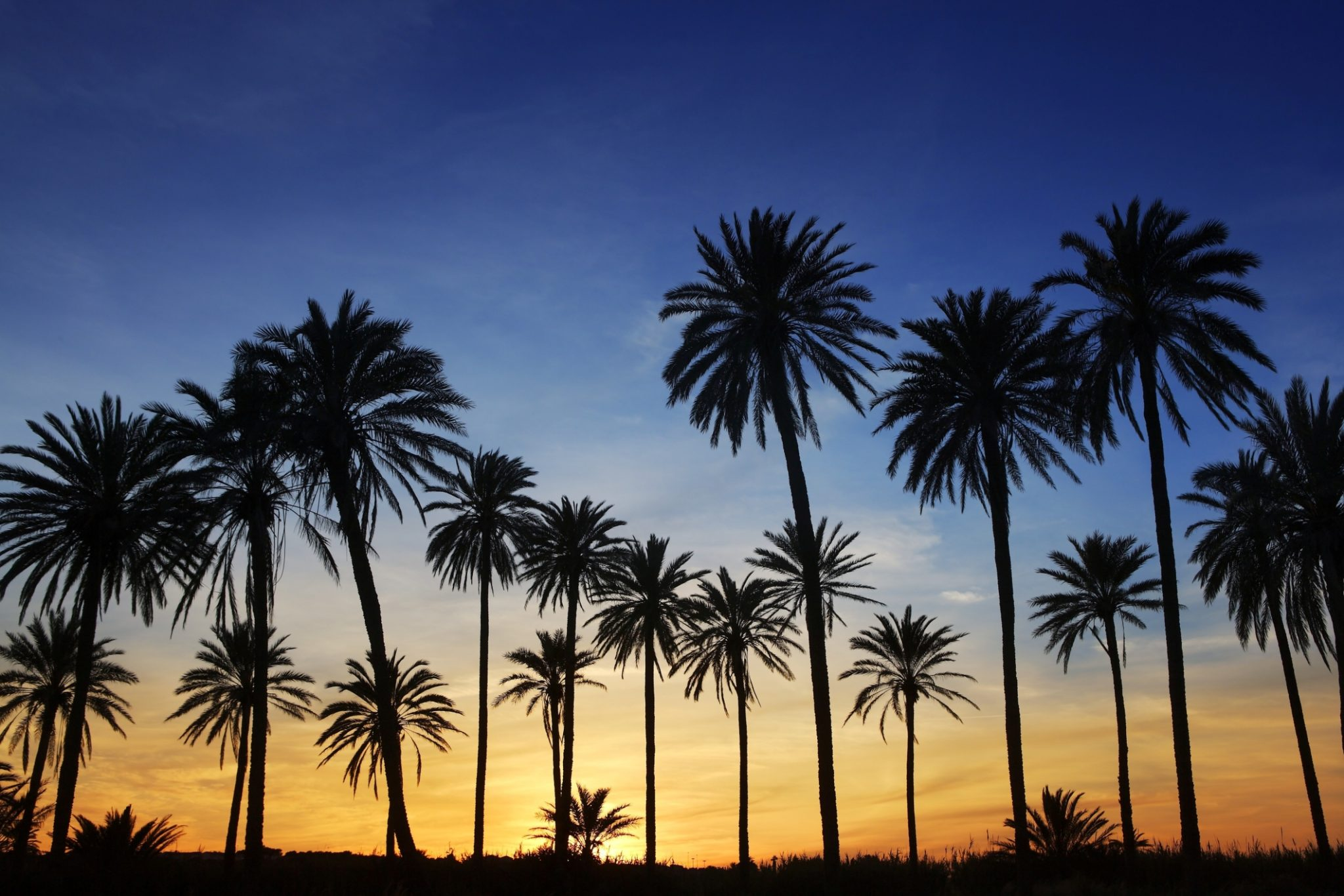 palmtrees-sunset.jpg